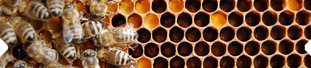 vše pro včelaře